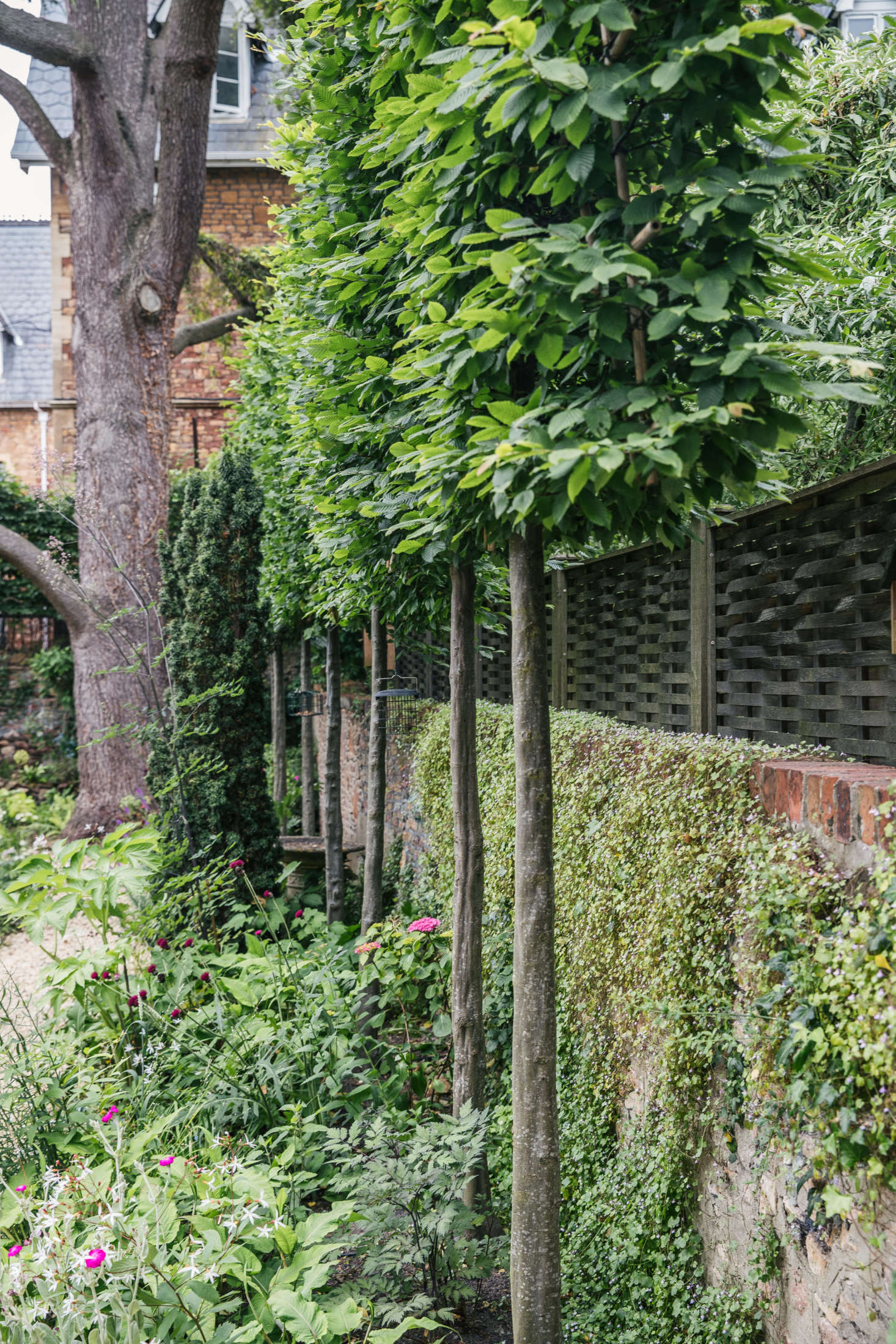 A row of pleached hornbeam trees adds structure to the perimeter.