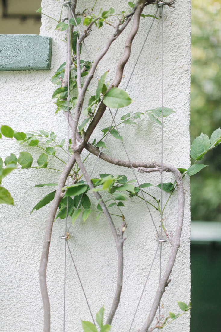 Complicating matters slightly, Michelle has a wire trellis that supports her flowering wisteria. To avoid disturbing (or breaking) the vines, the painters decided to use a small paintbrush around and under the trellis and the foliage.
