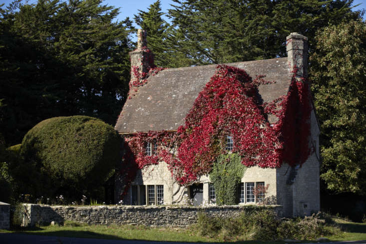 Boston ivy in the Cotswolds, England.