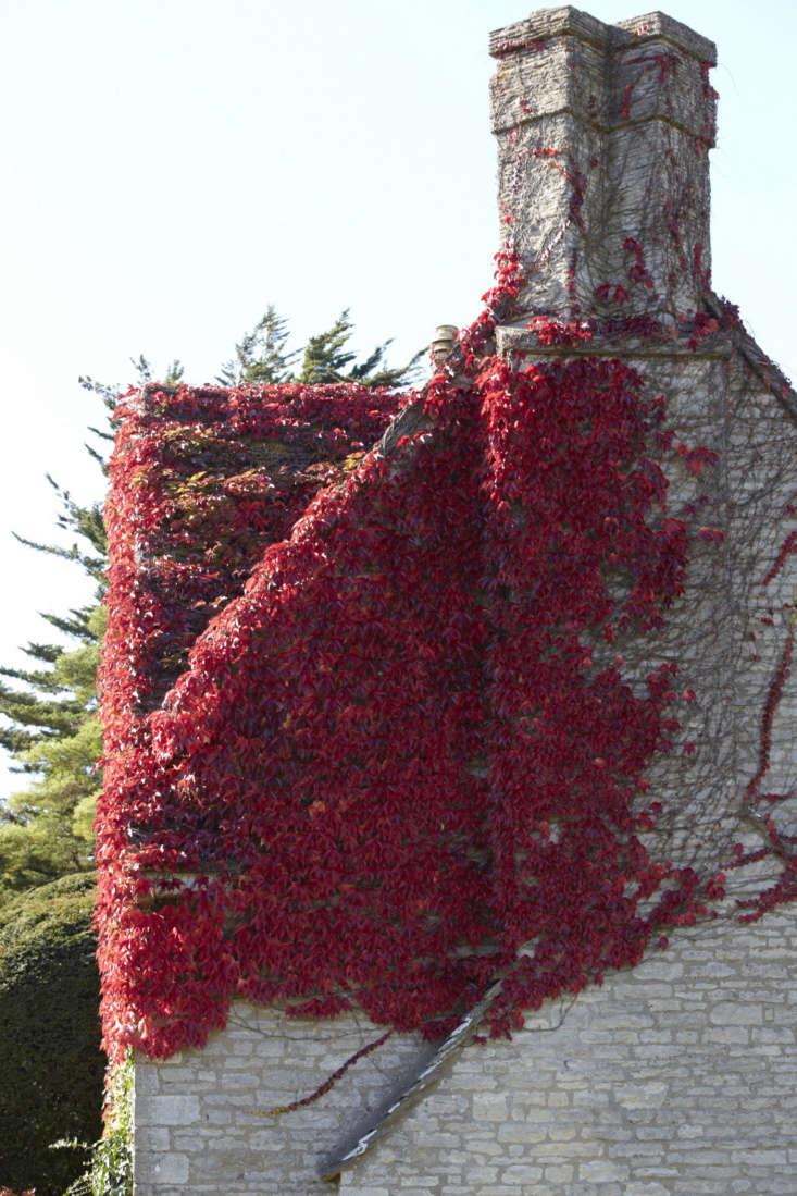 Boston ivy heading for the chimney.