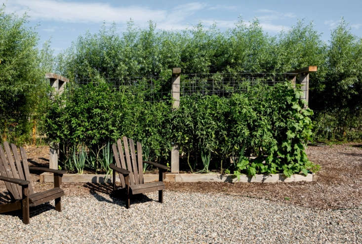 """At Cornman, Stephen built much of the garden from reclaimed wood. """"These beds are all made from what used to be a front fence. When I first started working on the garden, Chef Kieron had mentioned that he didn't like that fence, so I said, 'Well, that's a lot of material that I can use for free.' I love taking something that isn't ideal and turning it into something else that is ideal.&#8\2\2\1;"""