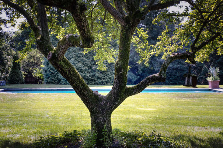Its edges flush with the ground, the pool blends seamlessly into the lawn.