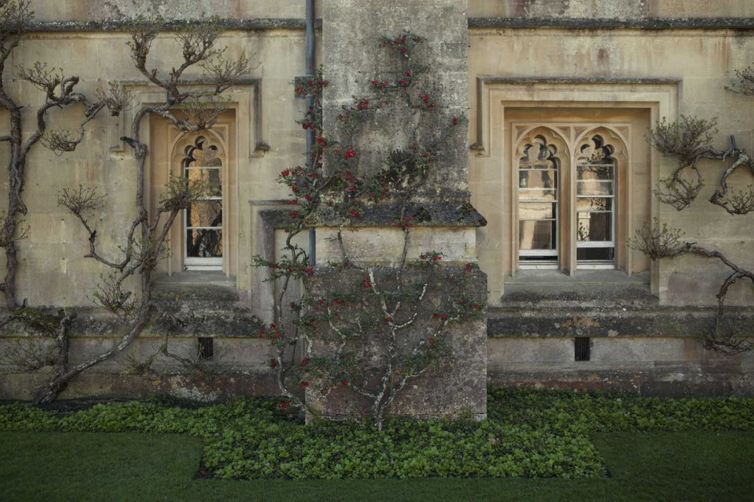Photograph by Jim Powell for Gardenista, from The Secret History: A Master Class in Gothic Pruning.