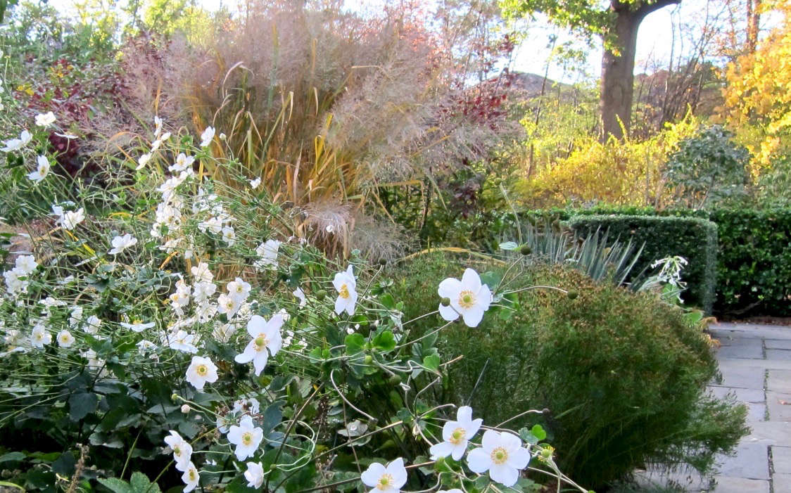 The prairie comes to the city. White Japanese anemones (&#8