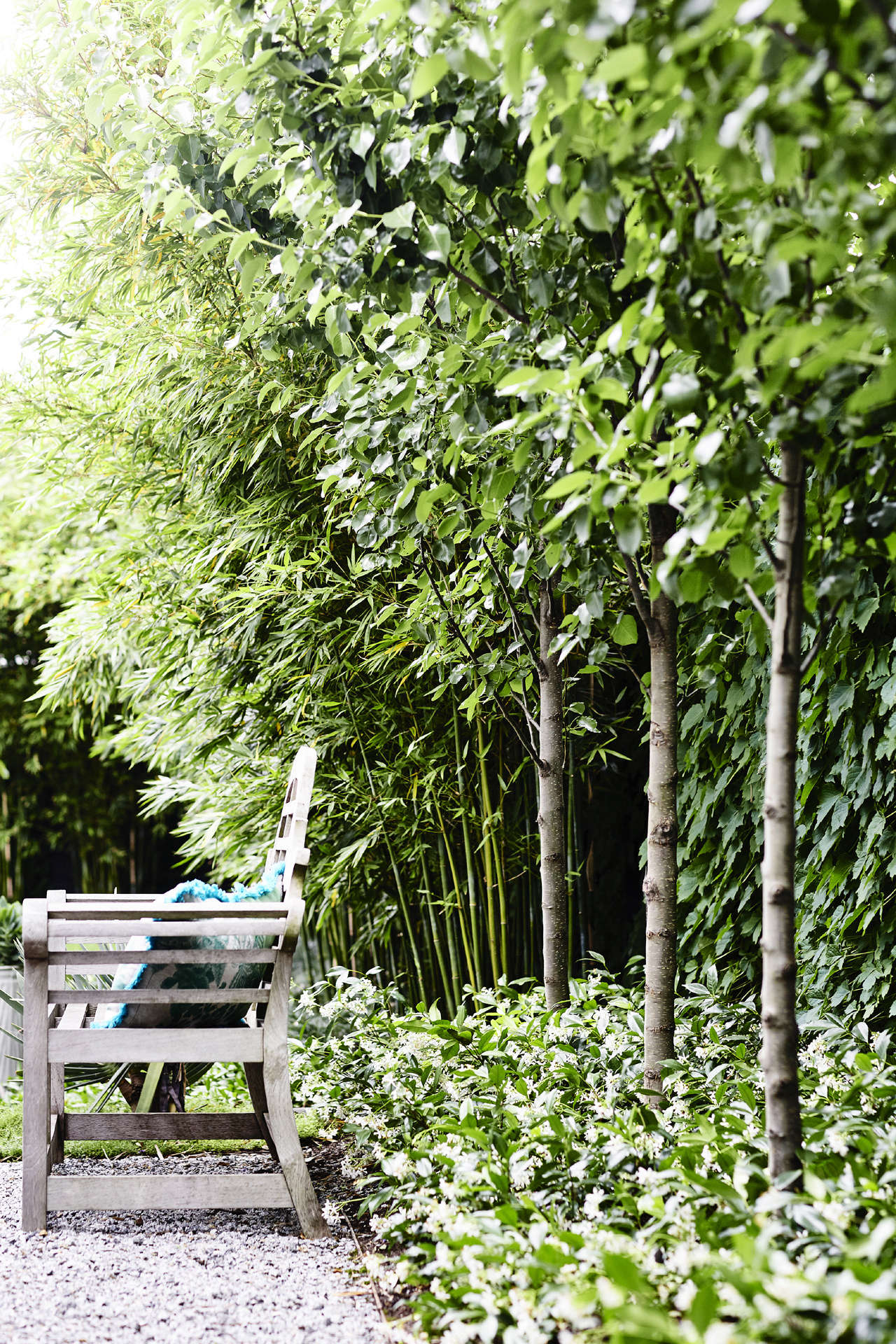 Boston ivy softens the fence, and a row of pleached flowering pears (Pyrus calleryana 'Chanticleer')creates another layer of foliage (and privacy).
