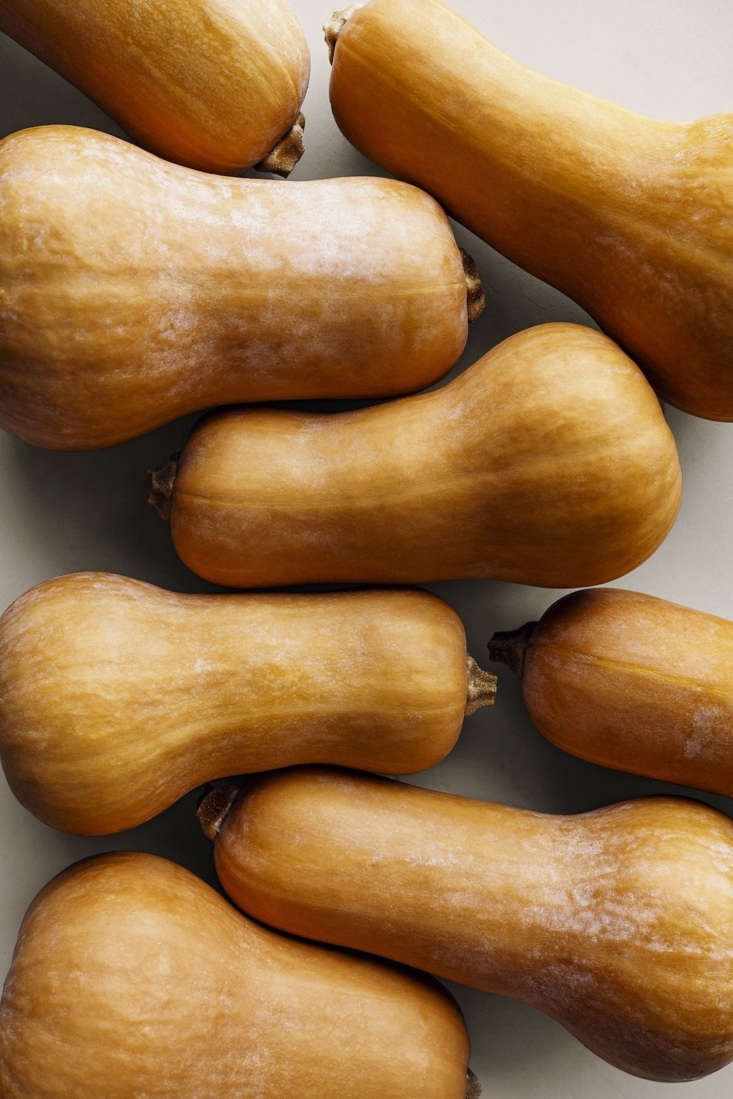Trial Variety Butternut 66\1 seeds are currently sold out.