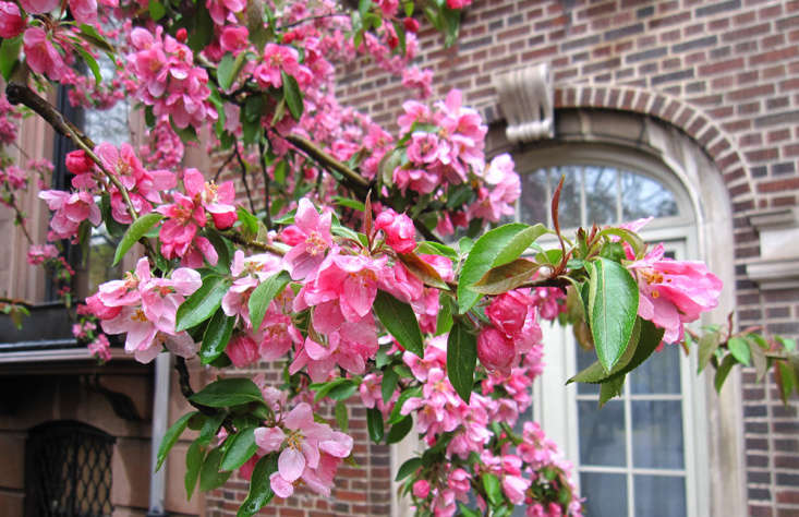 Crabapples with deep pink to burgundy blossoms include &#8
