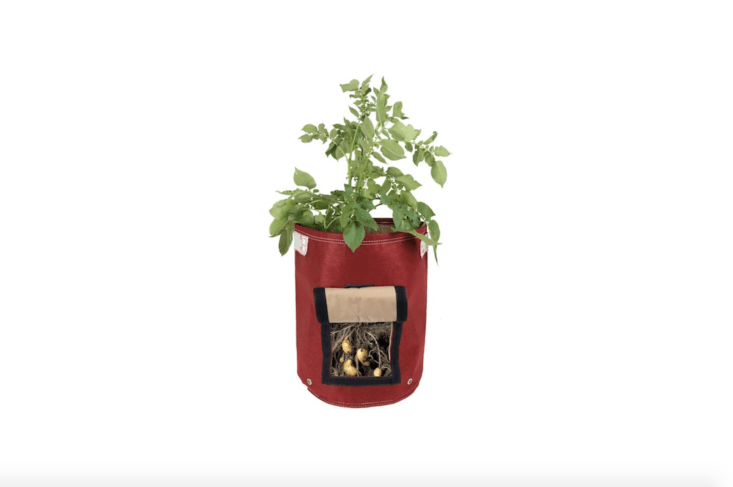 A good gift for an apartment farmer is a soft-sided nine-gallon Potato Planter Grow Bag from Bloem with a side flap to harvest potatoes. A self-contained vegetable garden, it is available in eight colors, including Union Red as shown. It is $.99 to $