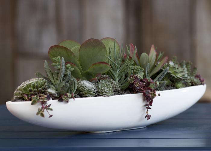 A shallow bowl or a platter with a lip is all you need to create a statement centerpiece with succulents. Arrange the plants to allow foliage to trail over the side. Shown here is the Canoe Pot from Bauer Pottery.
