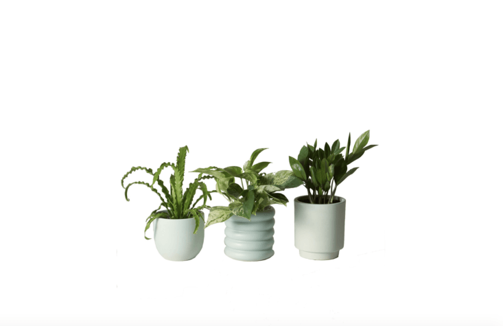From NY-based The Sill, a plant-of-the-month subscription can be customized to deliver Low Light Plants, Pet-Friendly Plants, or Plants for Beginners in 5-inch earthenware planters (available in five colors including mint as shown); \$35 a month.