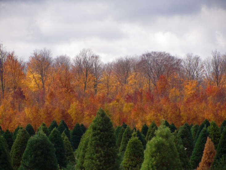 A Christmas tree farm in northern Michigan. Photograph by Rachel Kramer via Flickr, from Gardening loading=