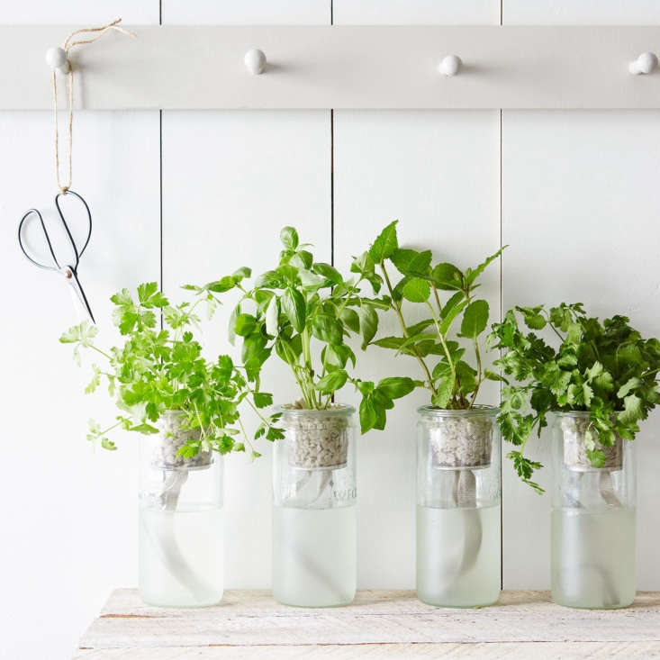 The Eco Planter Herb Kit uses a hydroponic self-watering system, which takes the guesswork out of watering and reduces water waste. Choose from basil, cilantro, parsley, or mint for $ each, or get a set of all four for $0 from Food5