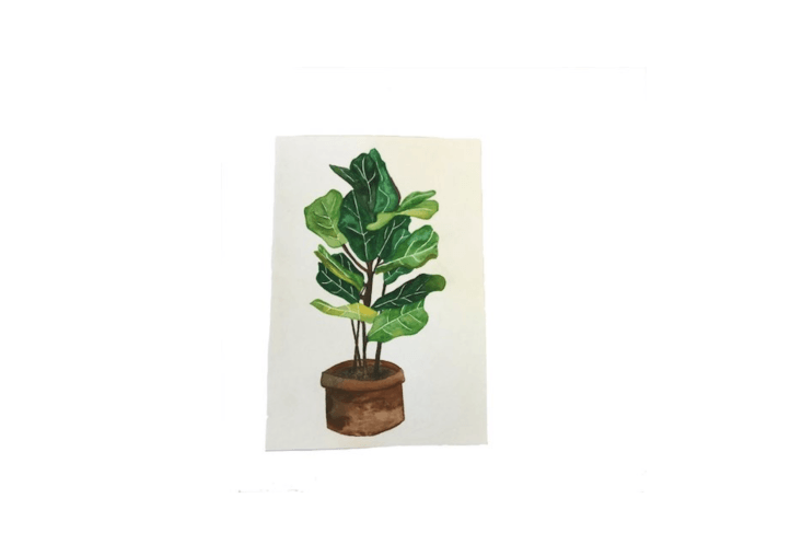 An original watercolor painting of a Fiddle Leaf Fig measures \1\1 by 7.5 inches and is \$40 from Ohhmadelinee at Etsy.