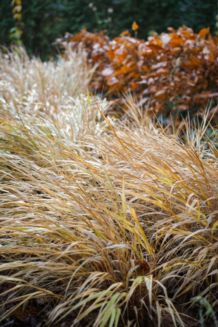 Low-growing clumps ofHakonechloa macra create a feathery ground cover in the front of the borders. For more growing tips, see Hakone Grass: A Field Guide to Planting, Care & Design.
