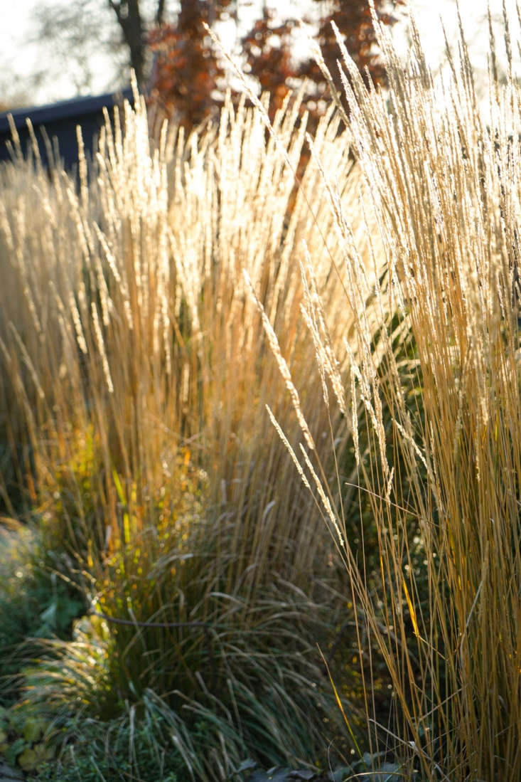 Feathery grasses can have as much visual impact as flowering plants.