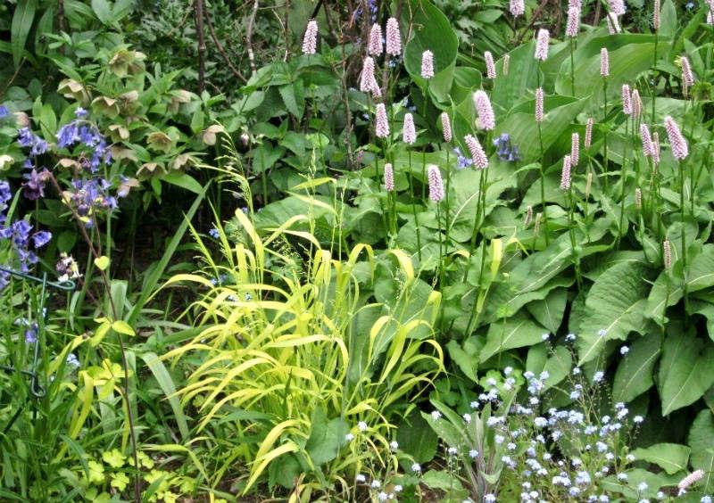 Says UK-based garden designer Nicky Corkerton: &#8