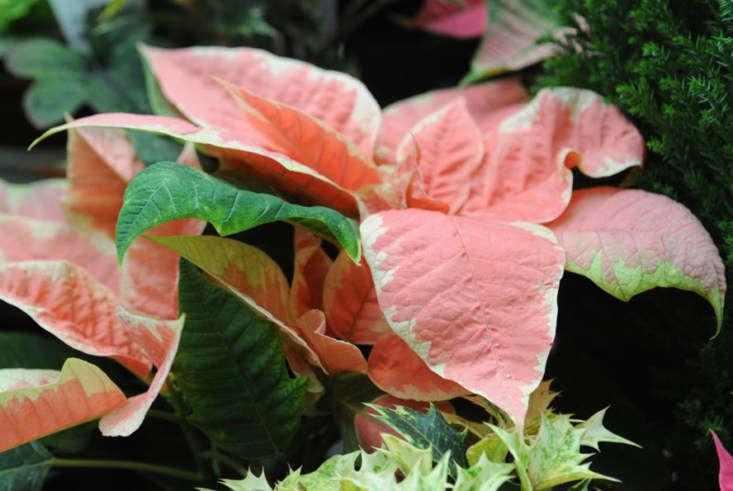 Photograph via Gardener&#8