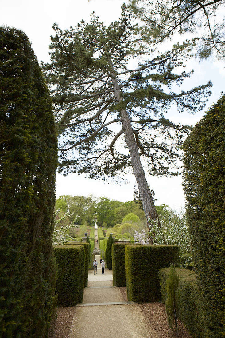 A leaning tower of Scots pine? P. sylvestris grows in forests through Europe; in Scotland, a single tree or cluster of two or three in a landscape is grown as a symbol of Scotland. Here in a formal English garden, a lone Scots pine overlooks a conifer allée. Photograph by Britt Willoughby Dyer.