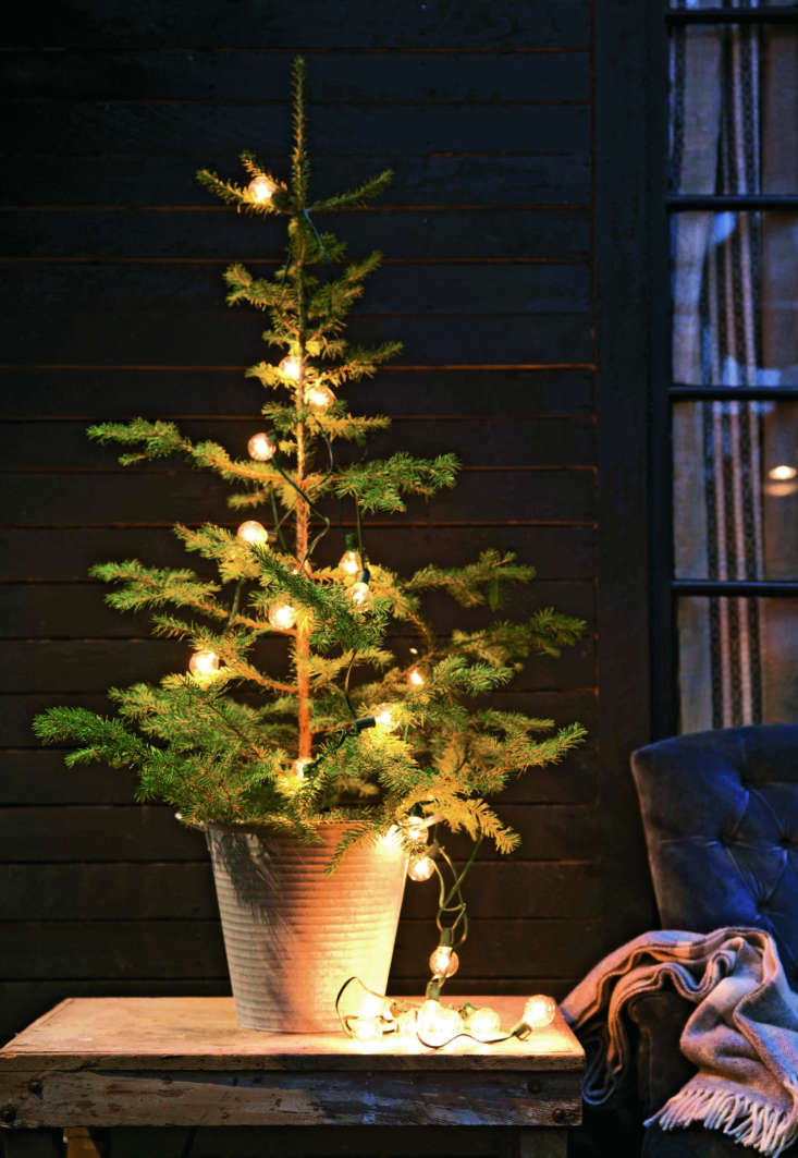 &#8\2\20;While most Americans prefer floor-to-ceiling firs, some European traditions dictate that the holiday tree shouldn't exceed 4 feet in height,&#8\2\2\1; notes Terrain. &#8\2\20;Small-scale evergreens between 3 and 4 feet tall provide a glimpse of green in parts of the home not suited to a full-size fir.&#8\2\2\1;
