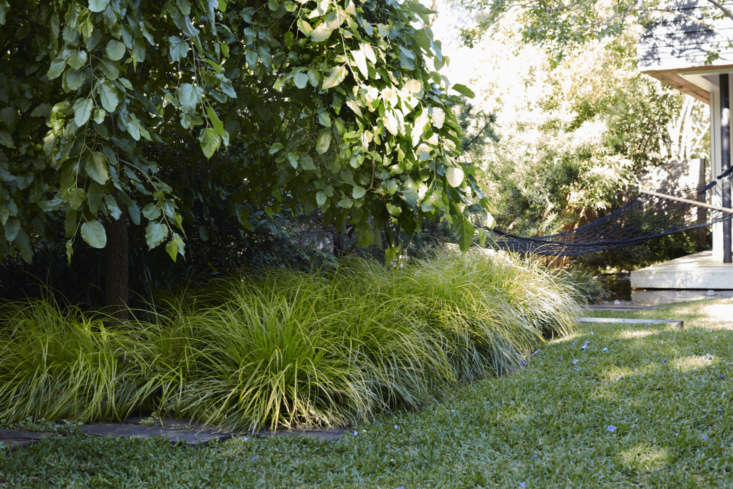 Australia-based landscape architect William Dangar also uses Japanese sweet flag grass as a front-of-the-border ground cover. Here, in his own garden, it creates a gentle wave. Photograph by Prue Ruscoe, courtesy of William Dangar.