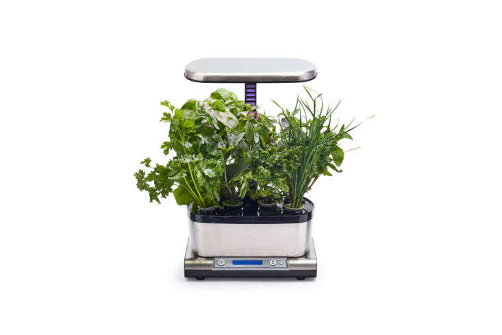 The AeroGarden Harvest Elite WiFi with a Gourmet Herbs Seeds Pod Kit is soil-free and works with high-performance LED lights for optimal growing (white light for rapid growth, blue for larger yields, and red for more flowers and fruit). The interactive LCD display guides you through the growing process via your own smart device. It&#8\2\17;s \$89.96 at Sur la Table.