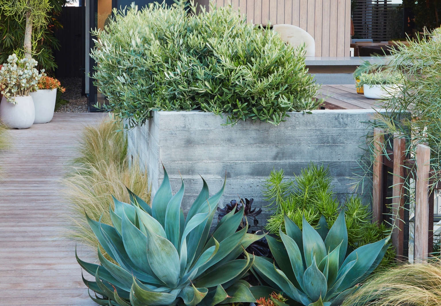 Low Water Landscapes 8 Ideas For Dry Gardens From Designer Daniel Nolan Gardenista