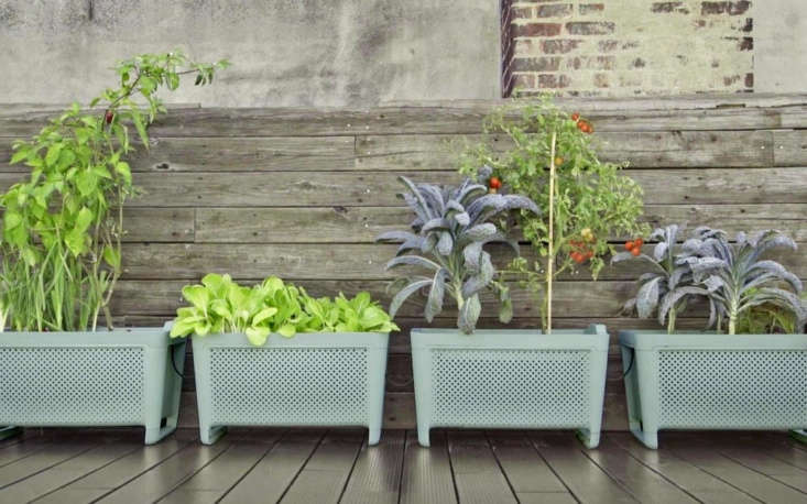 Better for balconies than countertops, the Grow Smart Vegetable Planter is an automated self-watering planter that connects to your phone for info on what to plant, when, and how to care for your plants for &#8\2\20;fresh produce with little effort.&#8\2\2\1; A single planter is \$99 directly through Grow.