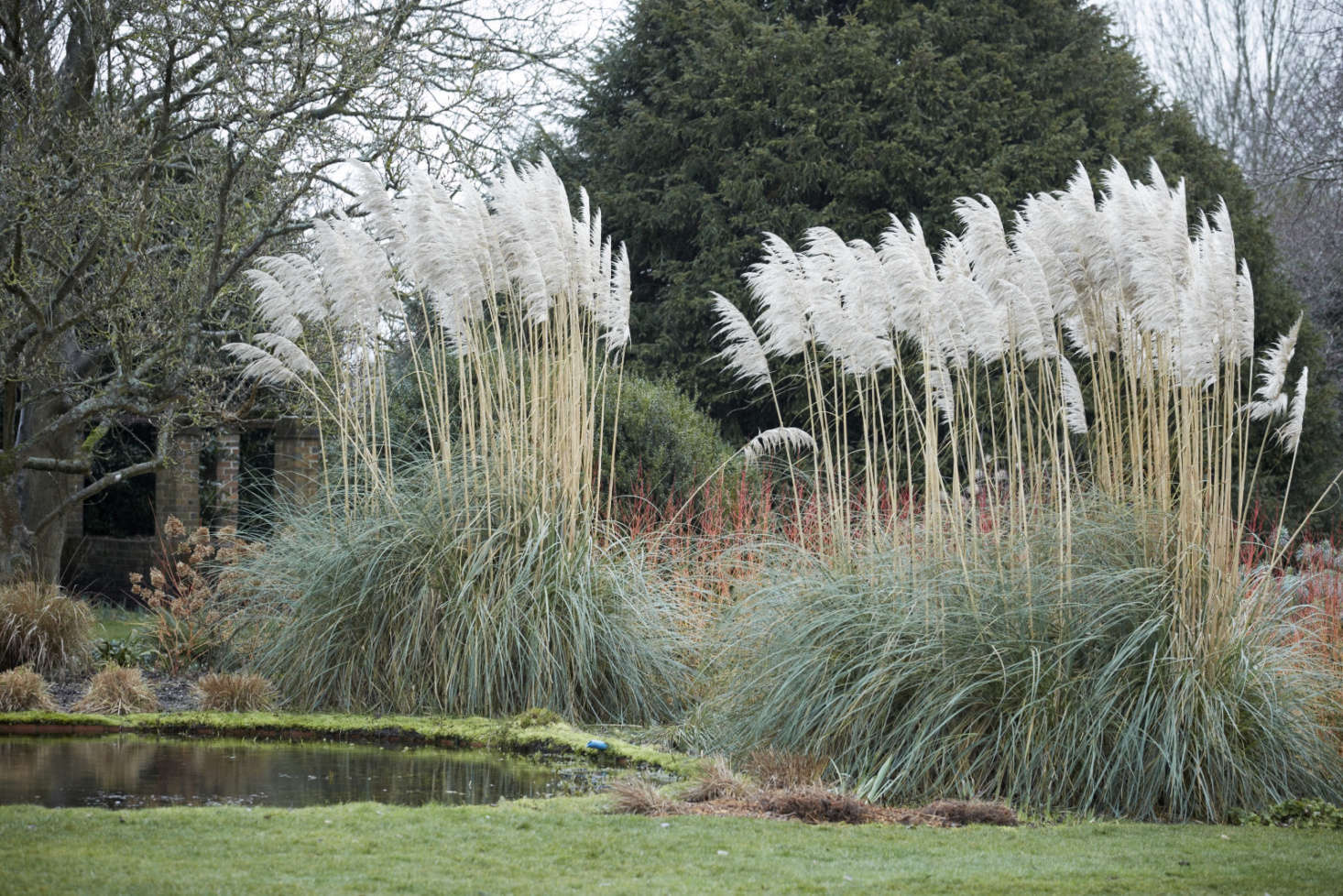 Pampas grass steals the show at water&#8