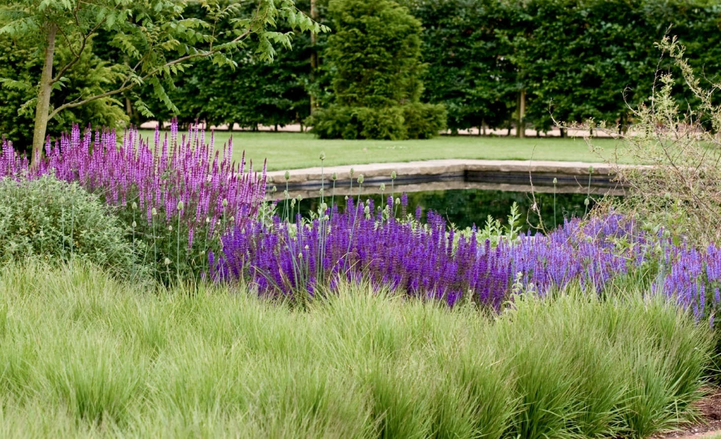 At Scampston Hall in Yorkshire, the gardens by designer Piet Oudolf rely on perennial grasses for texture and contrast to deeply colored perennials such as salvias. See more of Scampston in Garden Visit: Dutch Master Piet Oudolf in Yorkshire. Photograph by Alhsrc=