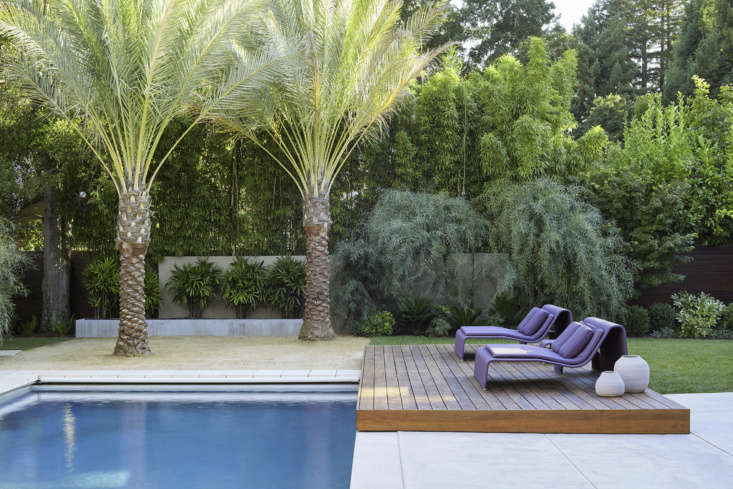 Two date palm trees (Phoenix dactylifera) impart a statuesque presence to layered privacy plantings at the perimeter of a swimming pool.