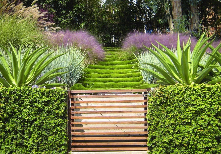 See more of this zoysia inArchitect Visit: A Hazy Landscape of Grasses in Santa Monica.Photograph courtesy ofGriffin Enright Architects.