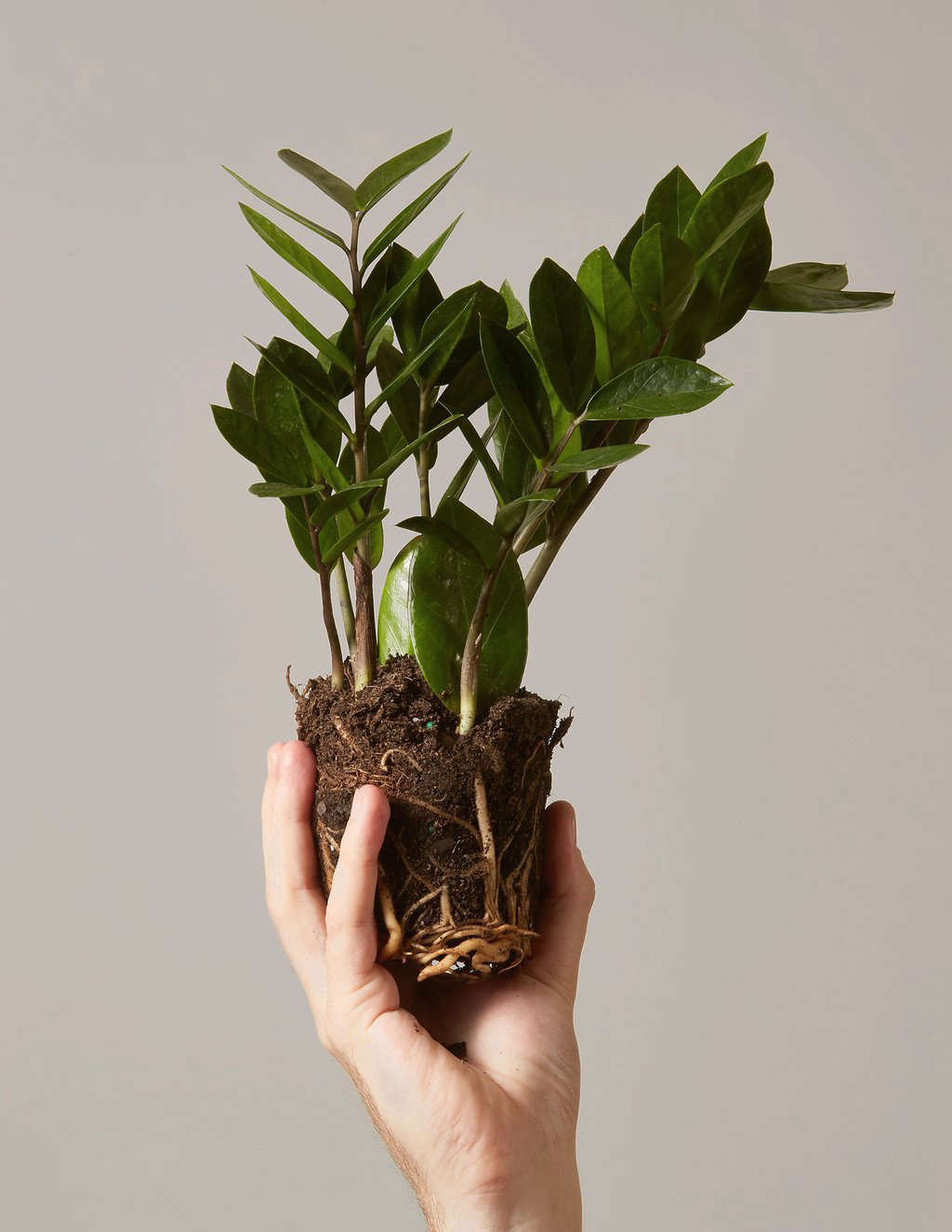 10 Things Nobody Tells You About Trendy Houseplants Gardenista
