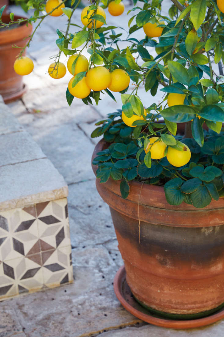 &#8\2\20;You can grow a lot of delicious fruit in just a few large pots,&#8\2\2\1; writes Lauri.