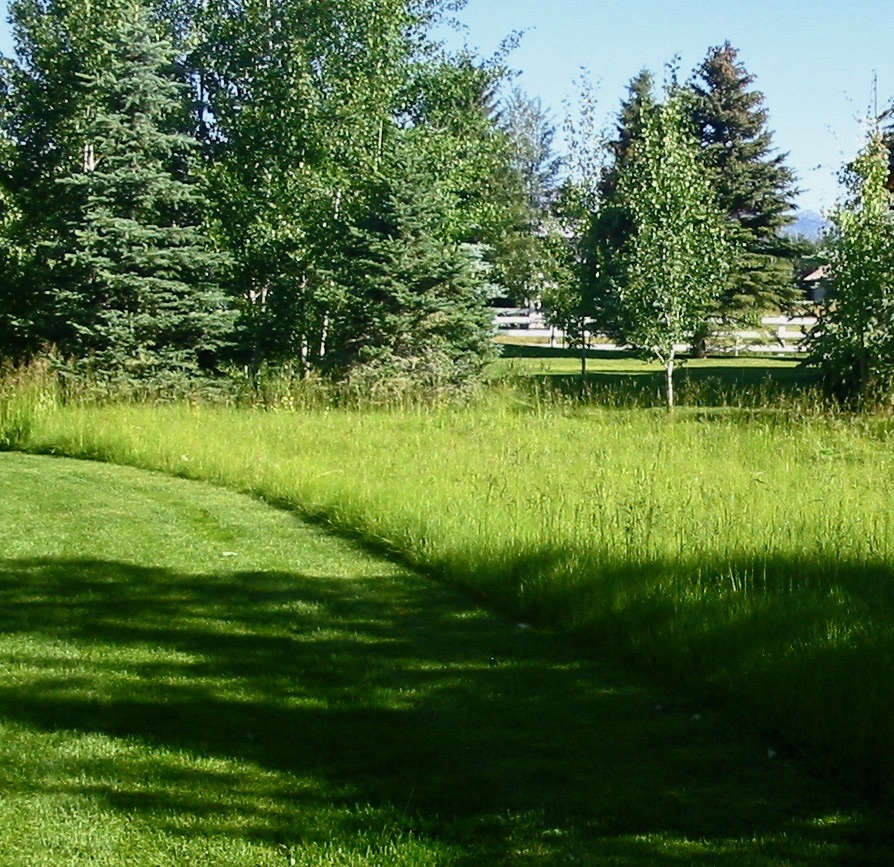 To mow or not to mow; that is the question. A versatile perennial grass, Kentucky bluegrass can grow into either a lawn or a meadow; 5 pounds of Bluegrass Meadow seed is $ at Seeds Trust.