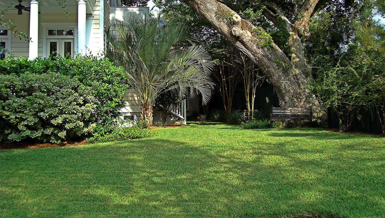 Sod Solutions sells St. Augustine grass. For more information and prices, see Sod Solutions.