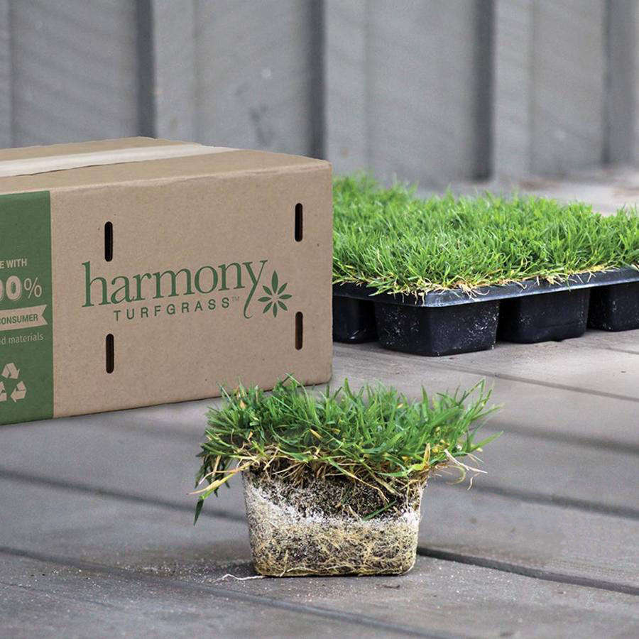 A tray of 36 St. Augustine Sod Plugs will cover 64 square feet; $54.98 at Lowe&#8