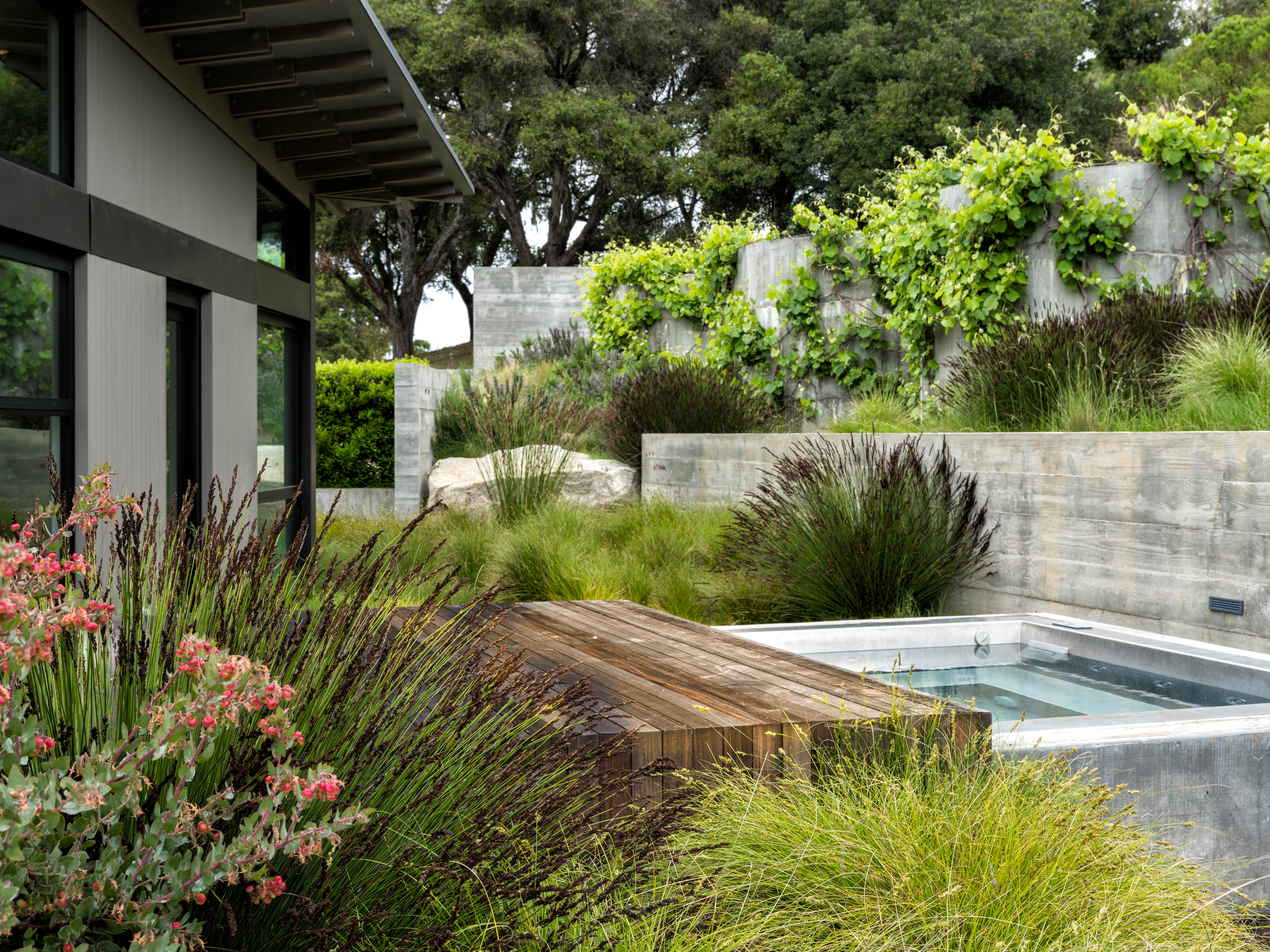 A custom, cedar-clad rolling cover and a spa fromBradford Products are sheltered by a poured-concrete spa shell and concrete privacy walls on which grapevines (Vitis californica &#8