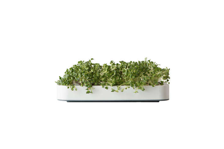 The Chef&#8\2\17;n Microgreens Garden comes with soil, seeds, and a tray that is slender enough to fit on windowsills and countertops; \$\25.49 on Amazon.