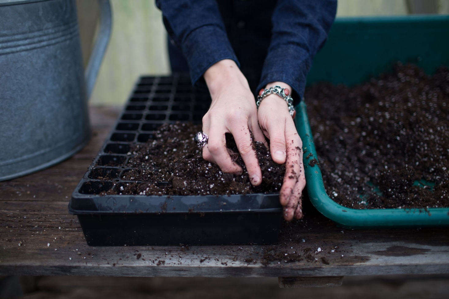 Erin likes these 50 Cell Plug Flats for starting seeds; $.95 for 5 at Johnny&#8