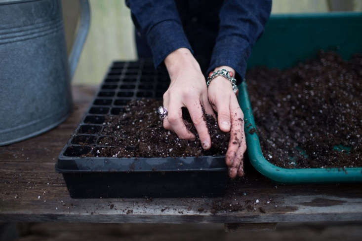 Photograph by Chris Benzakein, courtesy of Floret, from Your First Garden: What You Need to Know Before You Grow Plants from Seeds.