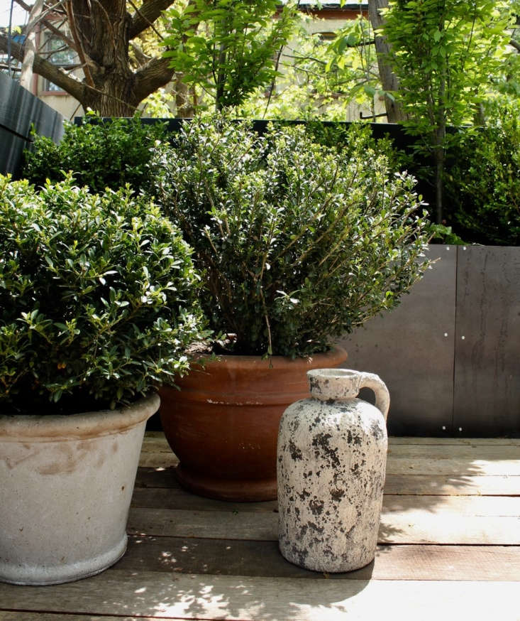 Boxwood &#8\2\16;Winter Gem&#8\2\17; thrives in a terra cotta pot in the Bed-Stuy neighborhood of Brooklyn. For more on container gardens, seeYour First Garden: \10 Compelling Reasons to Plant a Container Garden.
