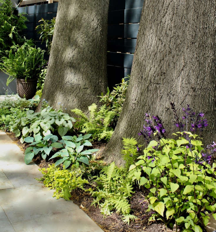 Hosta, Japanese tassel fern, and Aurea &#8\2\16;Creeping Charlie,&#8\2\17; planted around the trunks of mature trees.