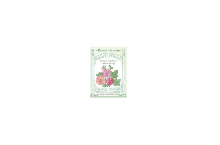 A packet of 0 seeds of Old Fashioned Hollyhocks &#8
