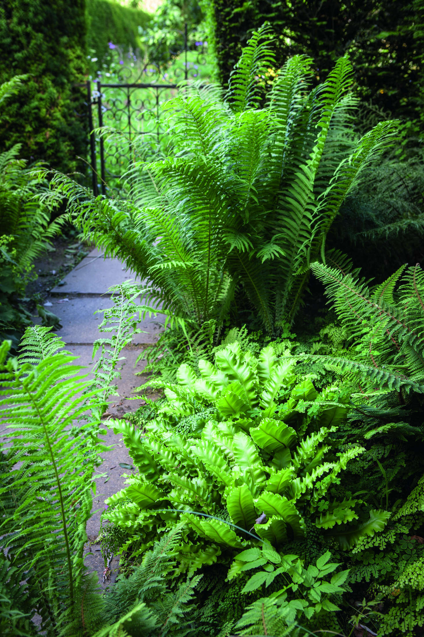 Beyond the rose garden, a shady area was the perfect location for Diany to plant a fern border using five varieties including maidenhair fern, evergreen hart's tongue fern, and the Japanese painted lady fern, which are interspersed with grasses including Molinia, Calamagrostis, and Miscanthus and, pictured, shuttlecock ferns.A gate leads to a small wildflower garden with the orchard beyond.