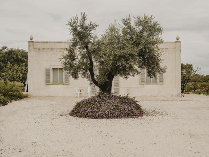Where to go next? A villa in Puglia, surrounded by olive trees. Photograph bySalva López.