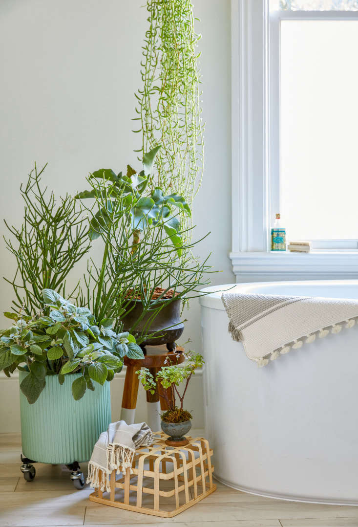 &#8\2\20;This arrangement is a lesson in the importance of layering for scale and interest. If all these plants were at the same height as the tub, it would make for a one-note display, and the tub would overpower the space. Instead each plant is on its own level.&#8\2\2\1;