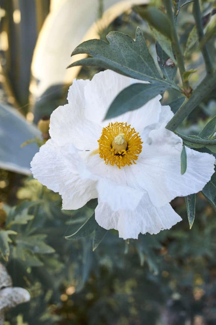 Flower in Victoria Pearson's Ojai Garden, Photograph by Victoria Pearson