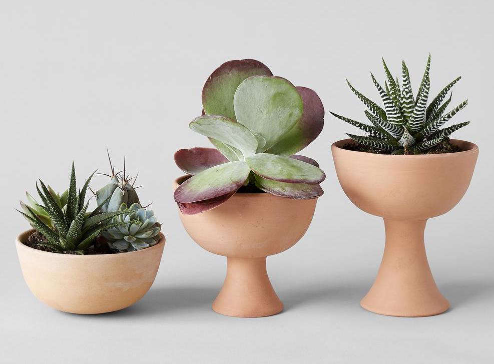 We love these Goblet Terracotta Planters by Ekho Design; $35 to $38 at Bloomist. The bowl-shaped Half-Sphere Terracotta Planter is $.