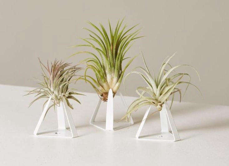 Maybe you have someone on your list who loves the idea of having houseplants but isn&#8