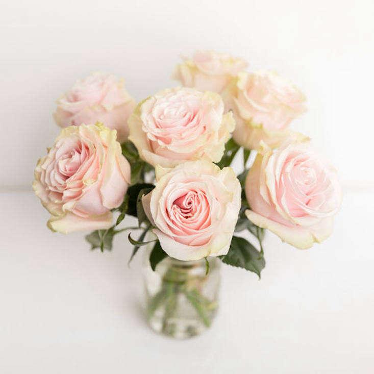 Ode à la Rose isn&#8